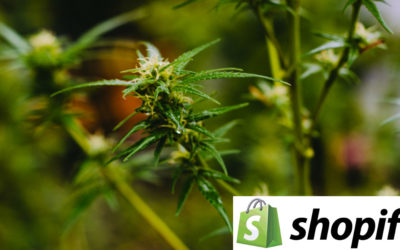 Shopify Will Run Ontario's Soon To Be Legal Online Cannabis Sales